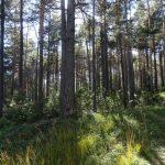 1733 Waldaufteilung Obsteig